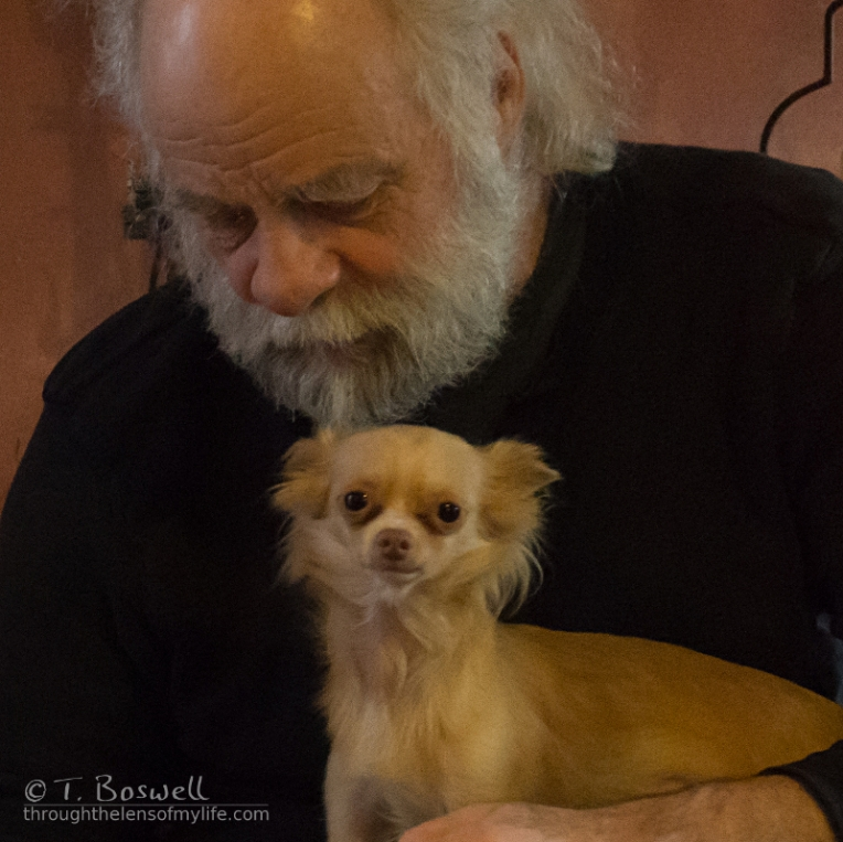 20150405-DSC07799-2-1x1-ron-man-brownie-chihuahua-wm